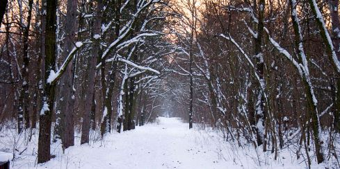 Winter forest near Budapest, Hungary. Wikimedia Commons.